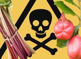 10 Most Outlandish Food around World