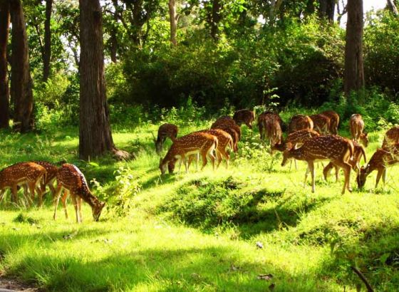 Joypur Forest: The Ultimate Weekend Destination