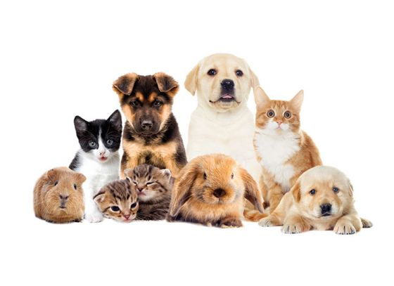 Top 5 ways pets can improve your life-condition