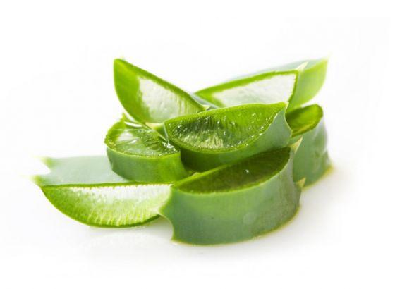Aloe Vera: the versatile home plant