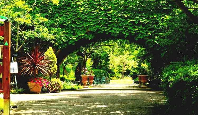 Not the Hanging Gardens of Babylon! - Jiyo Bangla
