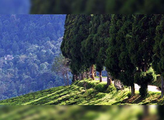 A house atop a hill- Tilabari