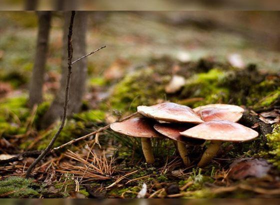 Mushroom or Mutton?