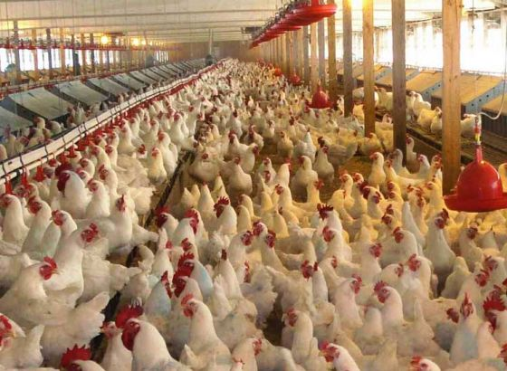 India's Largest Poultry Farm Now in Kalyani