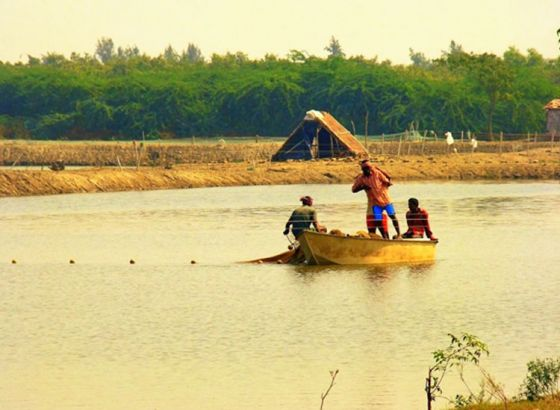 3 New Fish Varieties to be Cultivated in WB