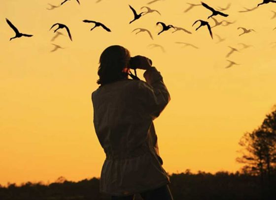 Places to hit this winter if you're a birdwatcher