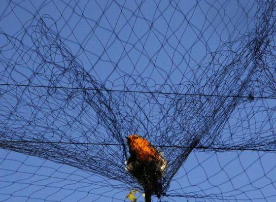 Fishing nets become bird catcher