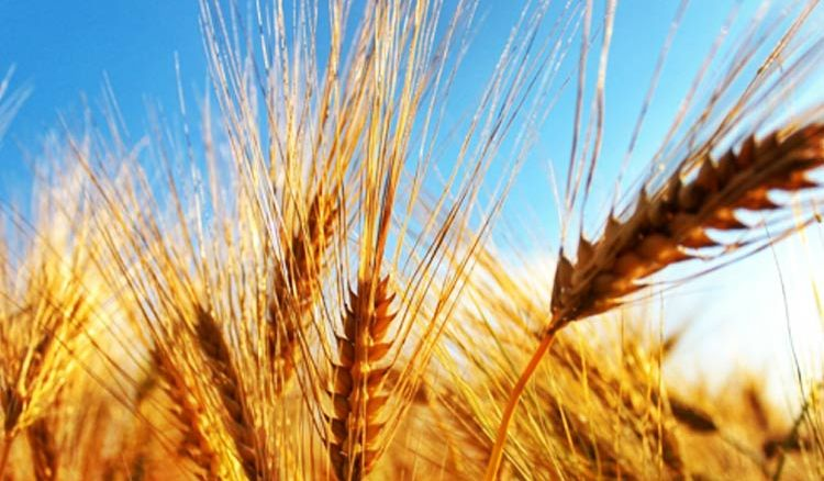 State govt distributed seeds for alternate farming