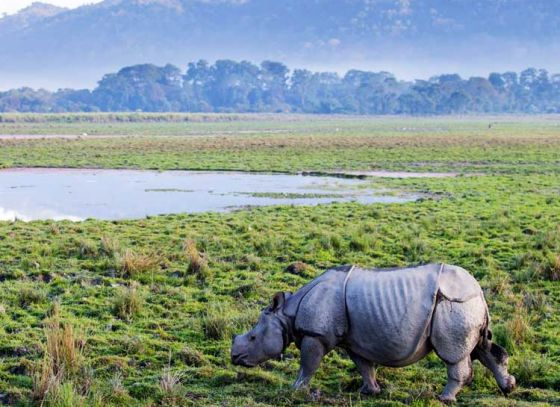 Kaziranga becomes more accessible to tourists from Bengal