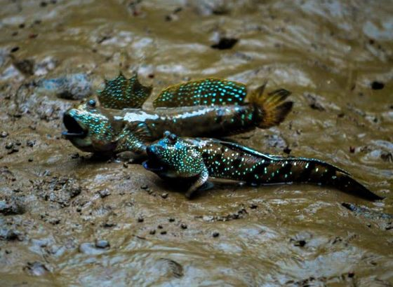 Collectors Delight at Bengal Fish Fest 2019