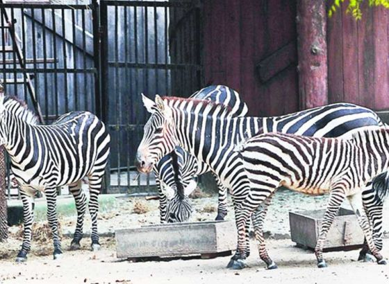 Alipore Zoo, Victoria To Open Early On Rally Day