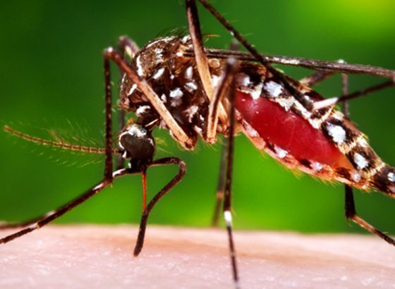 Common Guidelines To Be Followed For Dengue Treatment