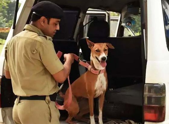 Kolkata stray pup now a part of elite dog squad