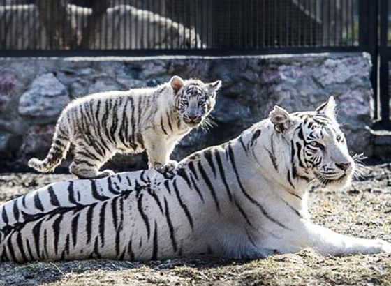 Alipore Zoo brining in new members