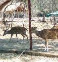 Purulia zoo authorities change menu for animals