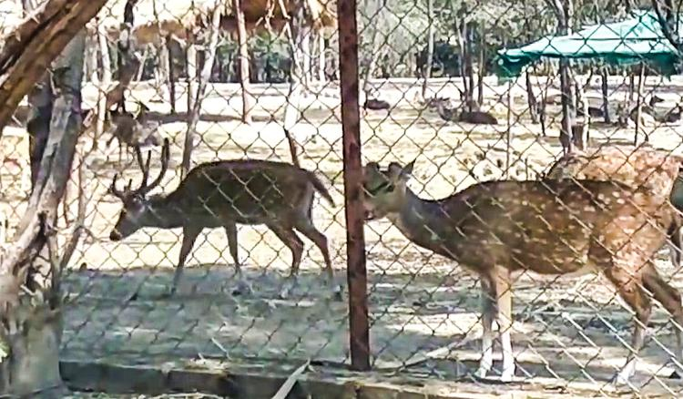 Purulia zoo authorities change menu for animals