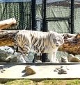 7-D experience at Bengal zoos soon?