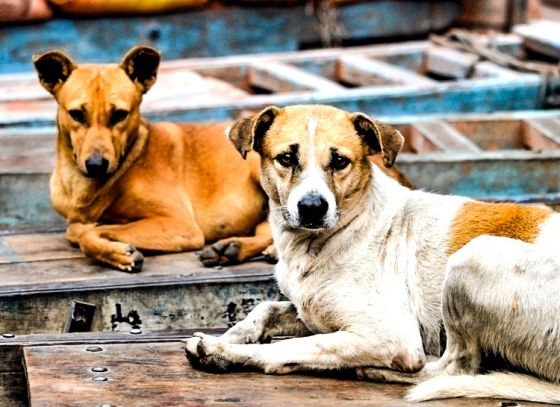 City to get two new dog pounds