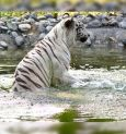Alipore Zoo's Summer Surprises
