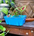 DIY Planter from Recycled Containers