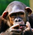Alipore Zoo director hurt by chimp