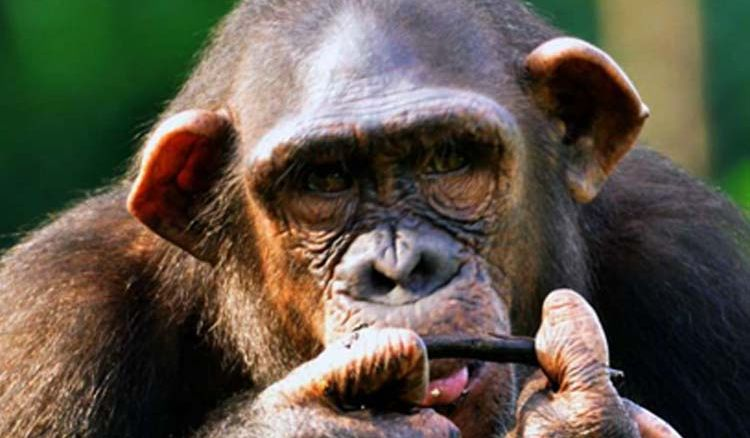 Alipore Zoo director hurt by chimp