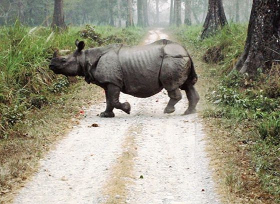 Forest Department to release rhinos at Patlakhawa