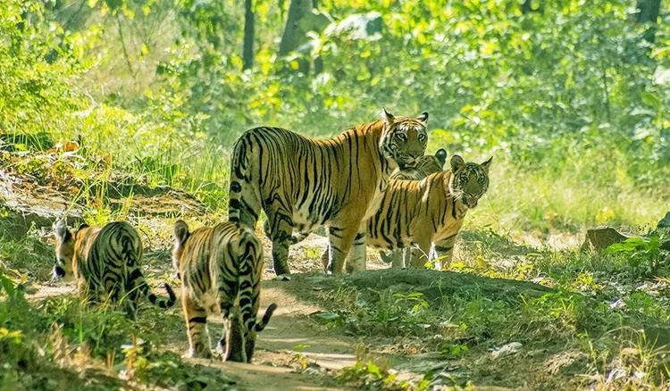 ZSI to publish about faunal diversities in North Bengal sanctuaries