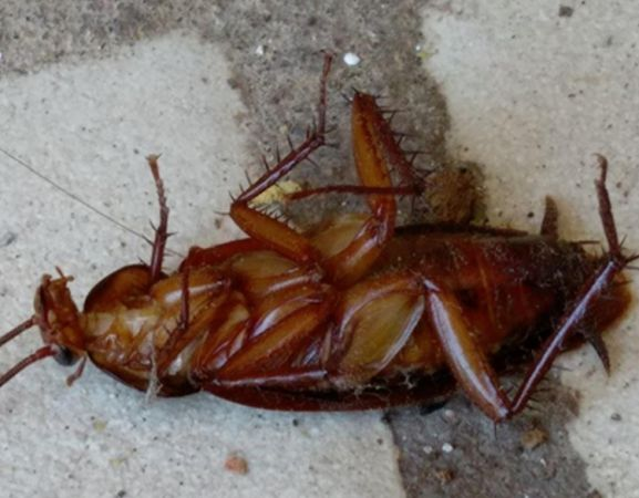 On Valentine's Day name a cockroach after your ex & feed it to meerkats