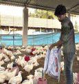 Chicken & eggs won't spread Coronavirus